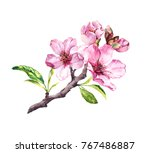 flowering cherry tree. pink... | Shutterstock . vector #767486887