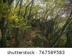 Small photo of Mountain trail in the thick forest with rocks and stones, lot of trees covered with moss