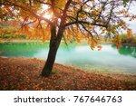 golden autumn tree near lake.... | Shutterstock . vector #767646763