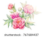 watercolor flowers illustration.... | Shutterstock . vector #767684437