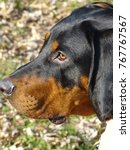 Small photo of black and tan hound puppy