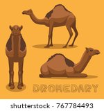 camel dromedary cartoon vector... | Shutterstock .eps vector #767784493