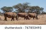 A Group Of White Rhinoceros In...