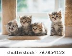 Stock photo group persian kittens sitting on cat tower 767854123