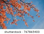 red and orange autumn foliage... | Shutterstock . vector #767865403