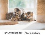 Stock photo group persian kittens sitting on cat tower 767866627