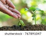 gardener's hand watering young... | Shutterstock . vector #767891047