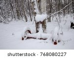 winter garden. winter garden... | Shutterstock . vector #768080227