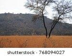 Golden Grassland Contrasting...