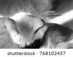 Sleeping Cat Iii