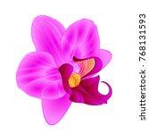 purple  orchid phalaenopsis... | Shutterstock .eps vector #768131593