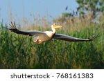 white pelican in flight | Shutterstock . vector #768161383