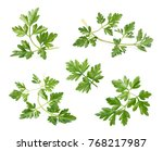 set of parsley isolated on... | Shutterstock . vector #768217987