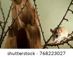 Small photo of a funny spiny mouse (acomys) sits on twigs in the lower right corner of the frame in a spacious cage with a bizarre stump