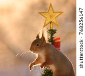 red squirrel in  a christmas... | Shutterstock . vector #768256147