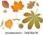 Color Leaves Raster Image.