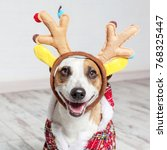 dog in a christmas costume.... | Shutterstock . vector #768325447