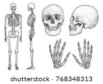 human skeleton collection... | Shutterstock .eps vector #768348313