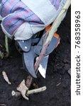 Gardener's Hand Pruning...
