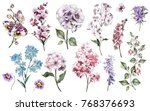 set watercolor elements of... | Shutterstock . vector #768376693