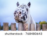 stallion of the norician breed... | Shutterstock . vector #768480643