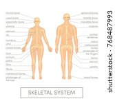 skeletal system of a human.... | Shutterstock .eps vector #768487993