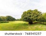 beautiful park scene in park... | Shutterstock . vector #768545257