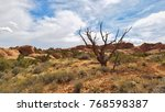 Dead Tree In Arches National...