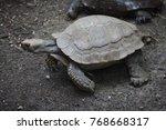 asian giant tortoise  manouria... | Shutterstock . vector #768668317