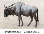 blue wildebeest  connochaetes... | Shutterstock . vector #768669013