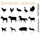 domestic animals  pets... | Shutterstock .eps vector #768736363