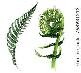 tropical fern leaves in a... | Shutterstock . vector #768931213