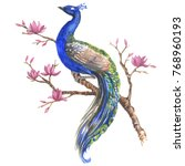 hand drawn watercolor peacock... | Shutterstock . vector #768960193