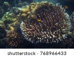 yellow fish in tropical... | Shutterstock . vector #768966433