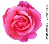 romance pink rose flower top... | Shutterstock . vector #769047577