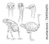 set of ostrich sketch  wildlife ... | Shutterstock .eps vector #769054693