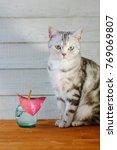 nice aroma concept   cat... | Shutterstock . vector #769069807