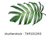 tropical green leaf of split... | Shutterstock . vector #769101343