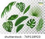 tropical leaves  exotic fern ... | Shutterstock .eps vector #769118923