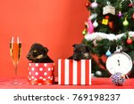 Stock photo boxing day and winter xmas party dog year pet on red background new year puppy at clock year of 769198237