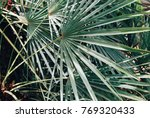 palm leaf garden background ... | Shutterstock . vector #769320433