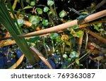 goose creek state park | Shutterstock . vector #769363087