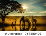 silhouette of elephants   trees ... | Shutterstock . vector #769380403