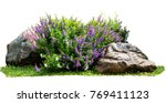 Stock photo natural flower and stone in garden isolated on white background garden flower part 769411123