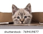 Stock photo little gray kitten inside a box isolated on white background 769419877