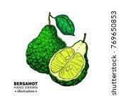 bergamot vector drawing.... | Shutterstock .eps vector #769650853