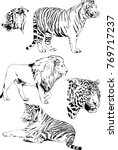 vector drawings sketches... | Shutterstock .eps vector #769717237