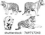 vector drawings sketches... | Shutterstock .eps vector #769717243