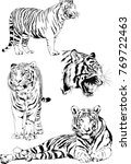 vector drawings sketches... | Shutterstock .eps vector #769722463