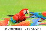 Small photo of Red macaws. Bird from Brazil, also known as Arara Vermelha.